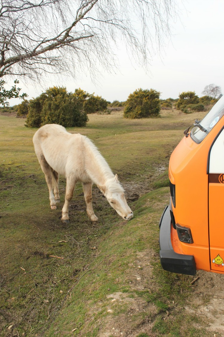 van and pony