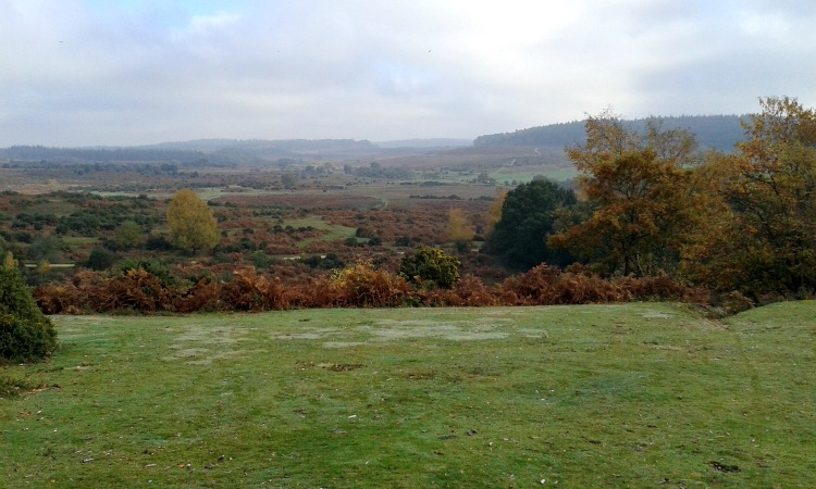 new forest nov 15